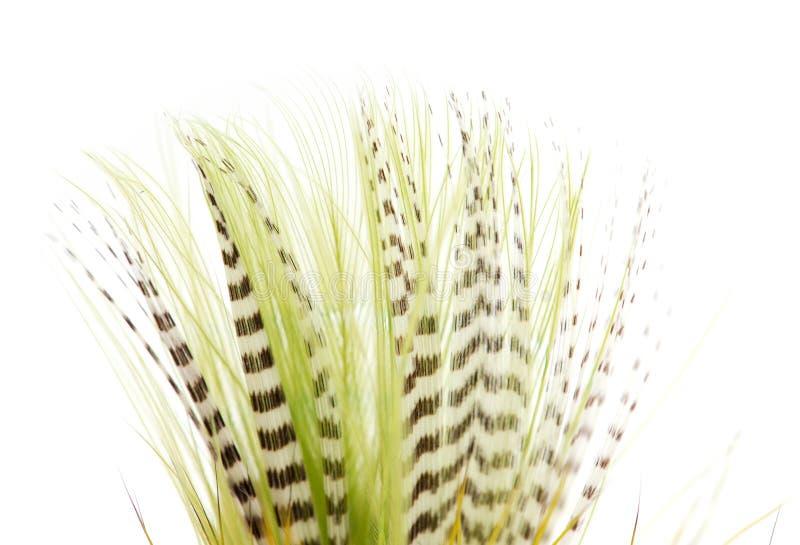 Belle plume sur le fond blanc Plan rapproché photo stock