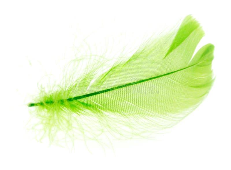 Belle plume verte sur un fond blanc photo libre de droits