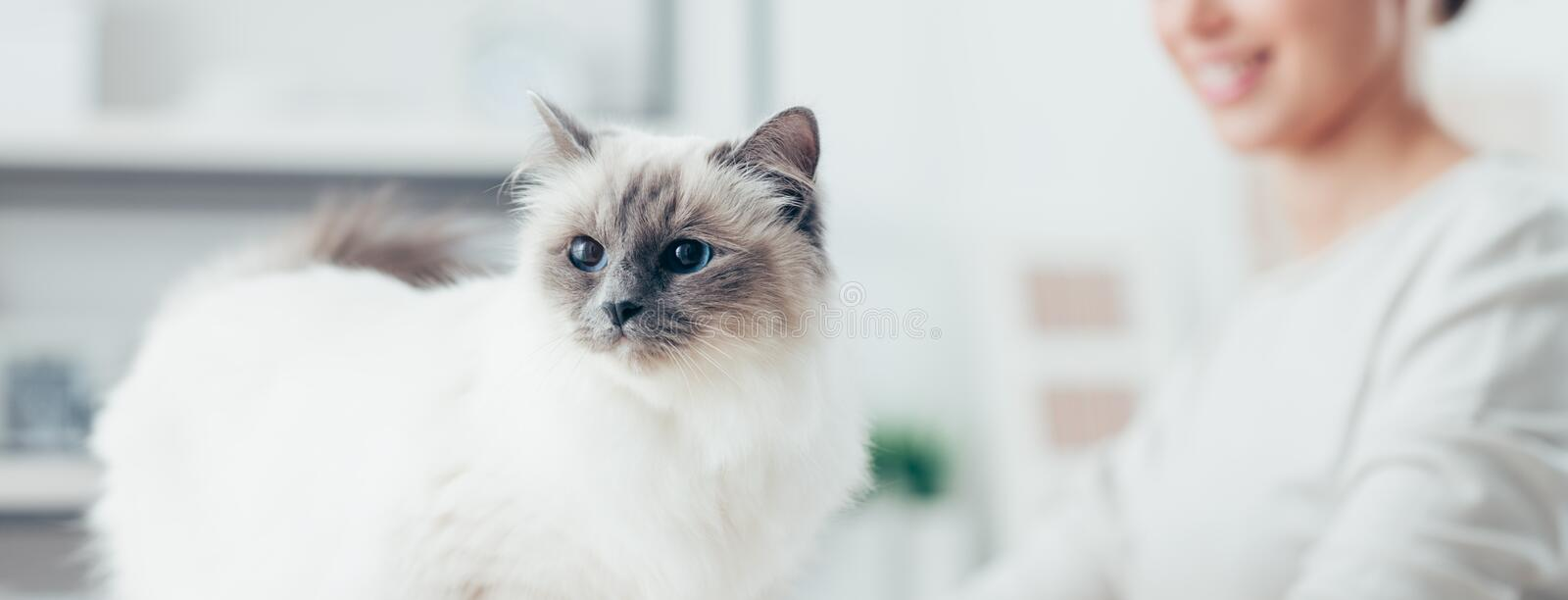 Belle pose de chat photo stock