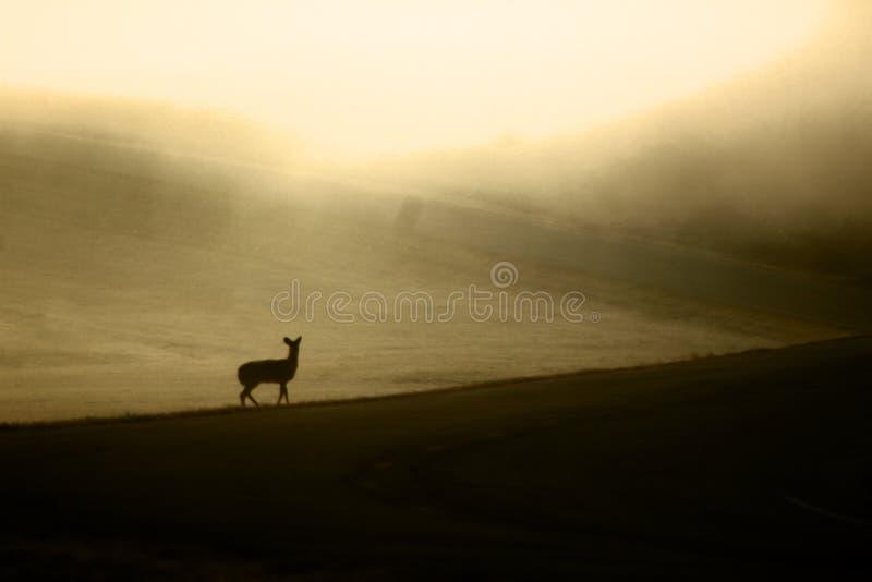 Belle position de cerfs communs fi?re dans le domaine photo libre de droits