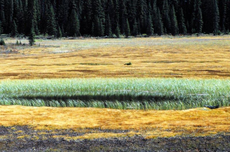 Belle regioni paludose di panorama del Canada e foreste della conifera fotografie stock