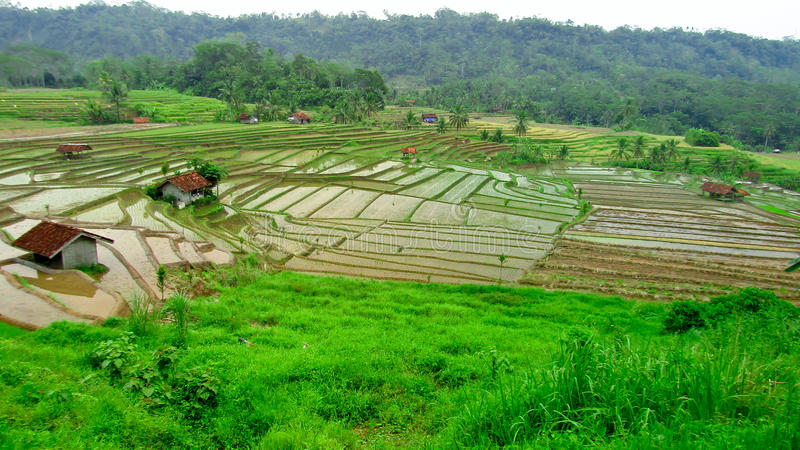 Belle risaie, Ciamis, Java ad ovest, Indonesia fotografie stock libere da diritti