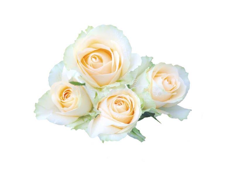 Belle rose de jaune d'isolement sur le fond blanc photos stock