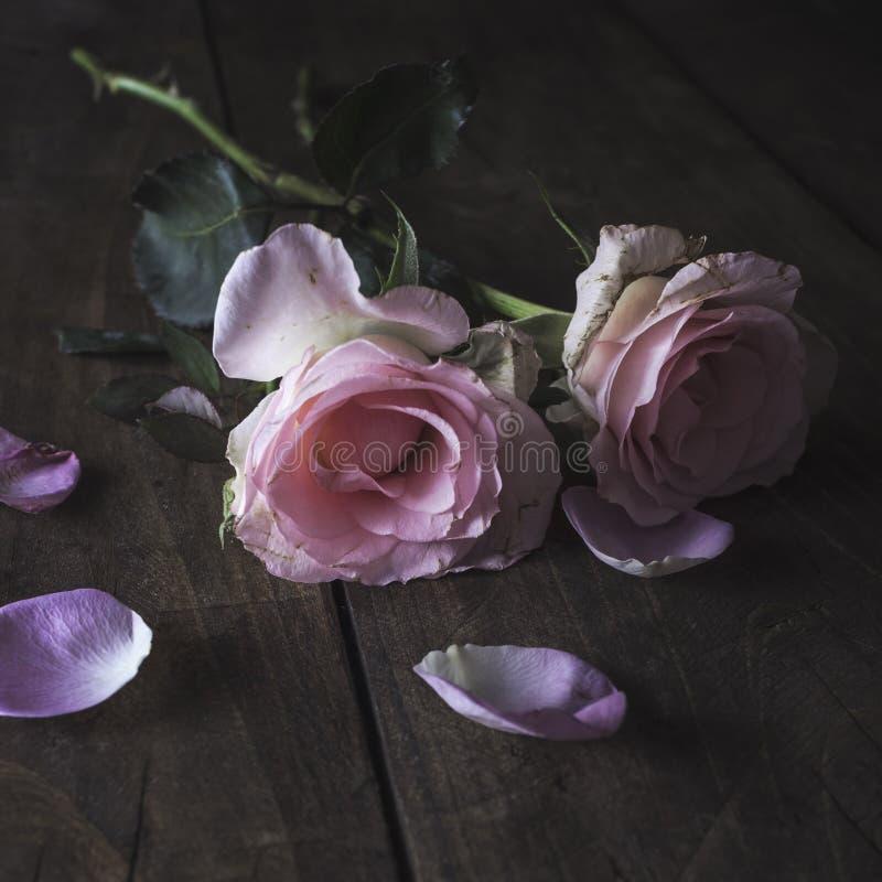 Belle rose de pastel sur un fond en bois images libres de droits