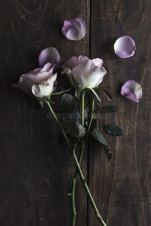 Belle rose de pastel sur un fond en bois images stock