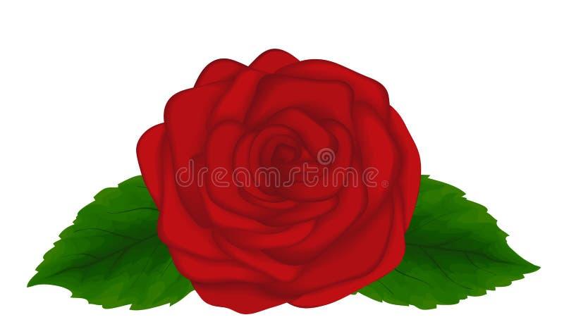 Belle rose de rouge avec des lames d'isolement sur le fond blanc. Élément grand de conception pour des cartes et des décorations illustration de vecteur