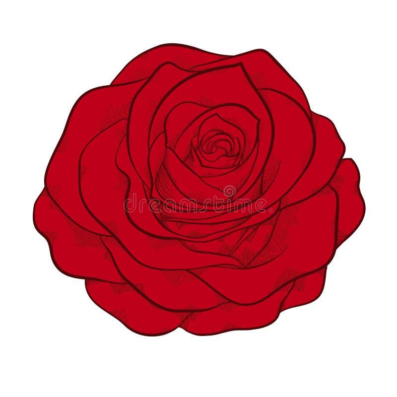 Belle rose de rouge d'isolement, style graphique illustration stock