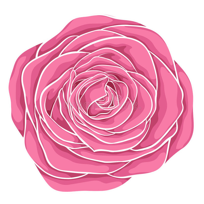 belle rose de rouge d'isolement sur le fond blanc illustration libre de droits