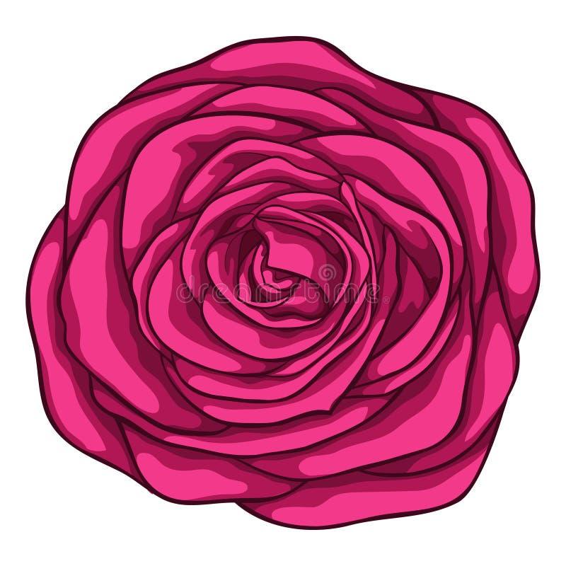 belle rose de rouge d'isolement sur le fond blanc pour des cartes de voeux et des invitations du mariage, anniversaire, Saint-Val illustration libre de droits