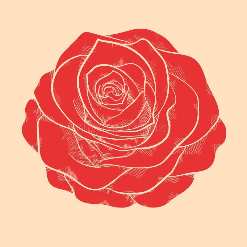 Belle rose de rouge dans le style graphique tiré par la main dans des couleurs de vintage illustration de vecteur