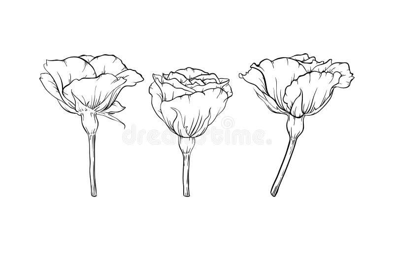 Belle rose noire et blanche d'isolement sur le fond concevez la carte de voeux et l'invitation du mariage, anniversaire, Valentin illustration de vecteur