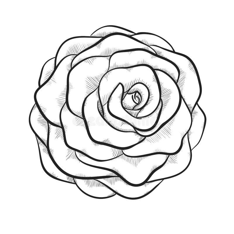 Belle rose noire et blanche monochrome d'isolement sur le fond blanc illustration libre de droits