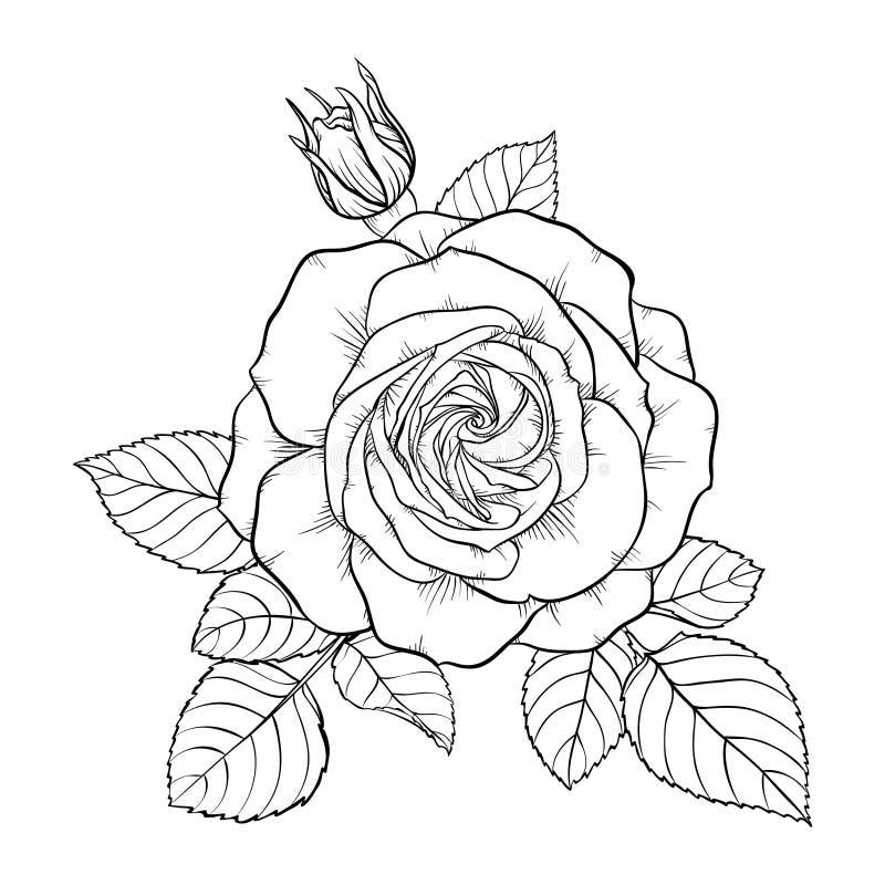 Belle rose noire et blanche monochrome de bouquet d'isolement sur le fond illustration stock