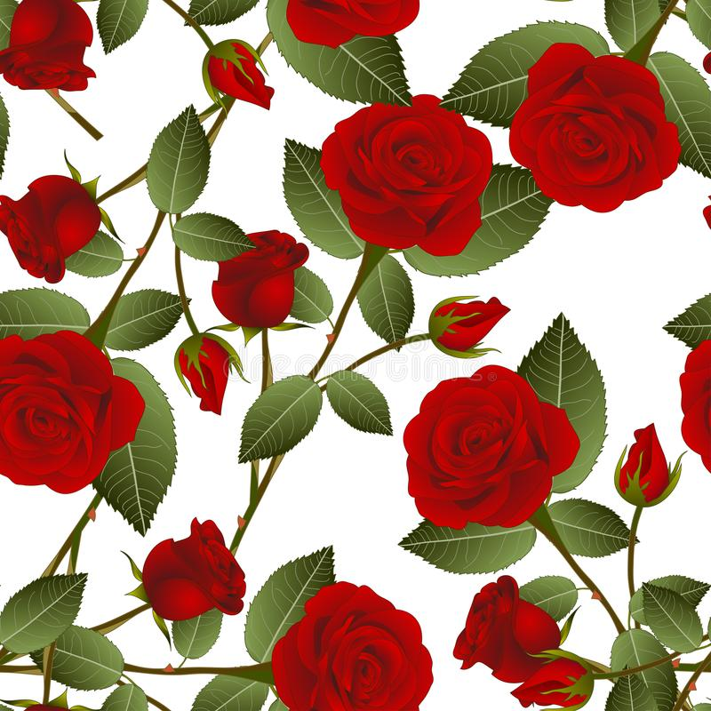 Belle Rose rouge - Rosa sur le fond blanc Jour de Valentine Illustration de vecteur illustration stock