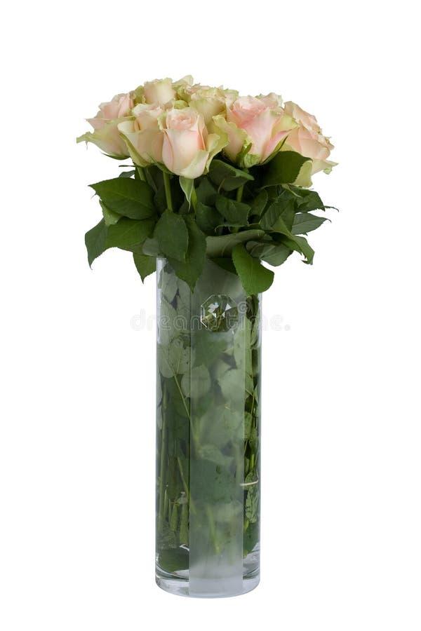 Belle rose su bianco fotografia stock libera da diritti