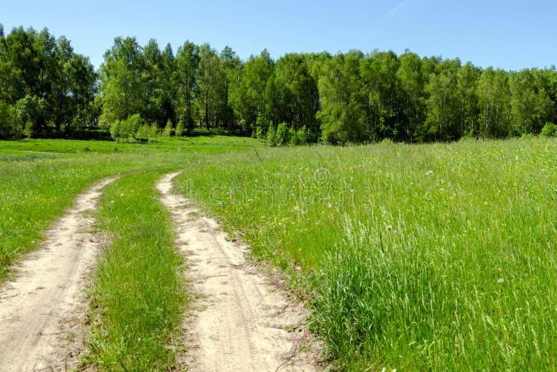 Belle route de campagne dans la for?t photo stock
