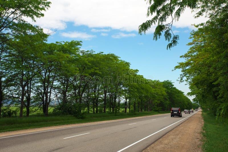 Belle route entre les arbres Véhicules mobiles photographie stock libre de droits