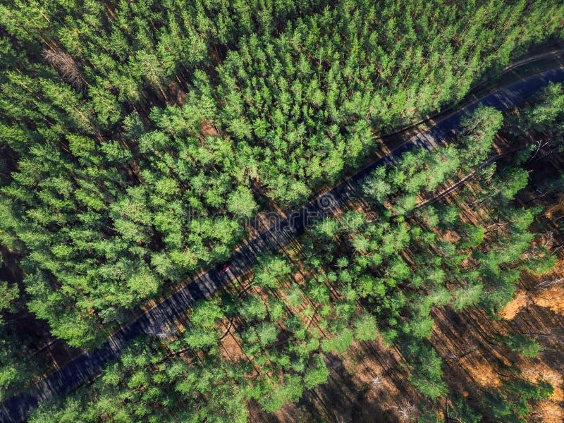 Belle route par la forêt à feuilles persistantes de pin le jour ensoleillé lumineux Tourisme d'Eco et concept de voyage Vue aérie photos stock