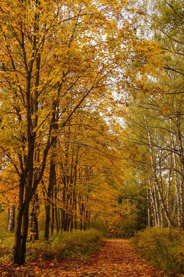 Belle ruelle jaune et rouge d'automne dans la forêt image libre de droits