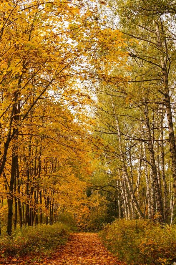 Belle ruelle jaune et rouge d'automne dans la forêt photographie stock libre de droits