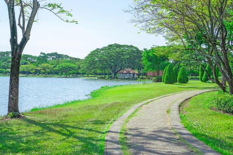 Belle scène, bon entretien de jardin près d'un lac bleu, passage couvert de pavage concret de courbe sous l'ombrage et arbres image stock