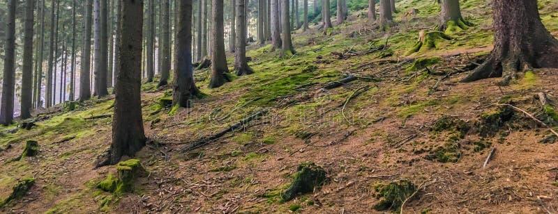 Belle scène colorée de paysage de forêt d'automne avec la composition en tronc d'arbre image libre de droits