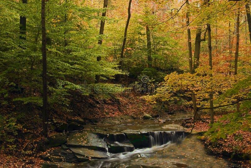 Belle scène d'automne avec la vapeur et le feuillage d'automne images stock