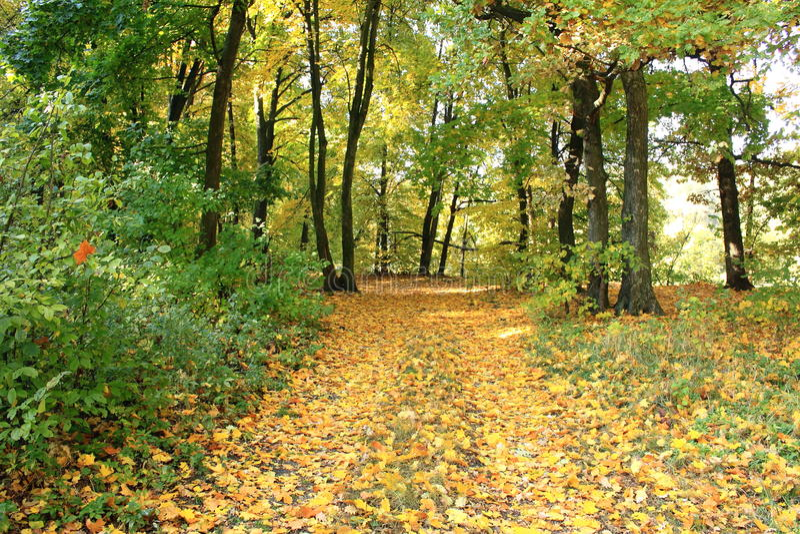 Belle scène d'automne de forêt d'automne Beau stationnement automnal greenwood photos libres de droits