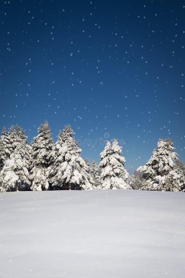 Belle scène d'hiver avec la forêt et les flocons de neige photo libre de droits