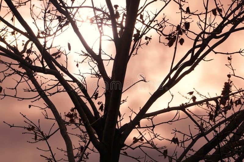 Belle silhouette contre le ciel obscurci photo stock