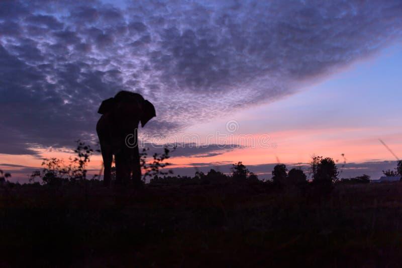 Belle silhouette de l'éléphant contre un coucher du soleil étonnant images stock