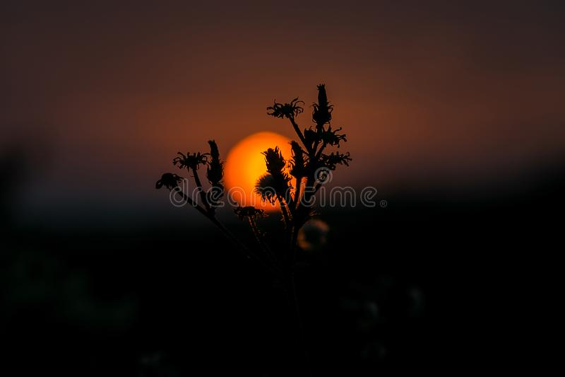 Belle silhouette de la fleur contre le contexte du coucher du soleil photographie stock