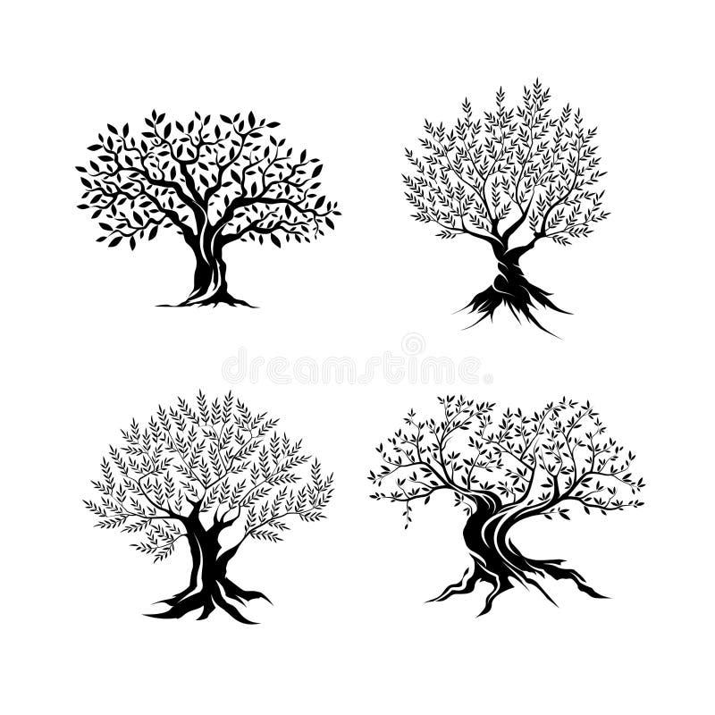 Belle silhouette magnifique d'olivier d'isolement sur le fond blanc illustration de vecteur