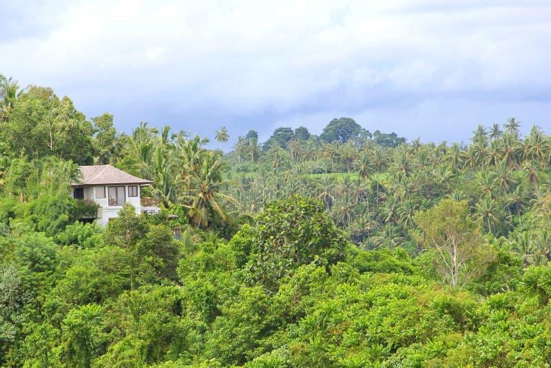 Belle station de vacances dans la forêt tropicale tropicale photographie stock libre de droits
