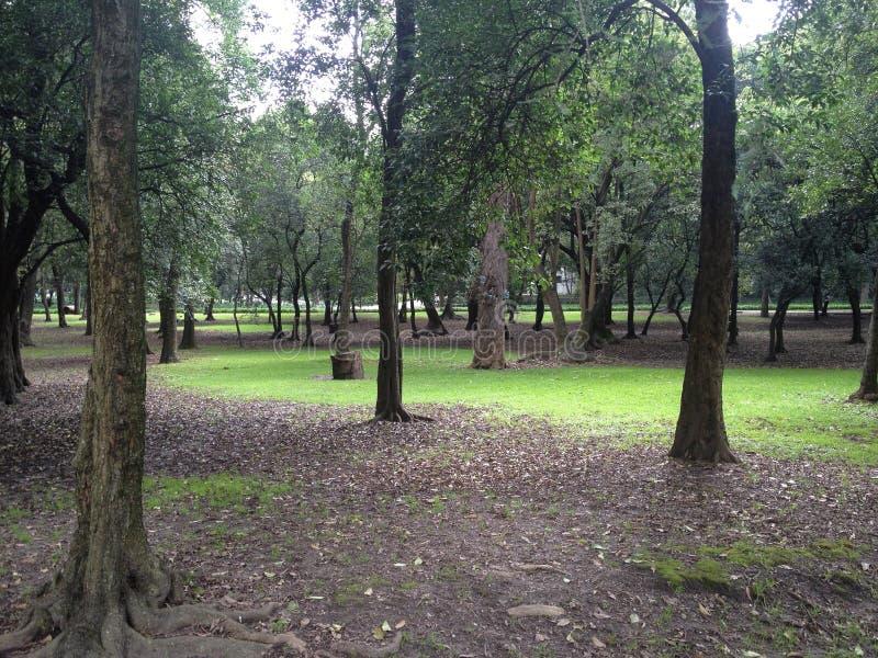 Belle tache o une forêt urbaine photo stock