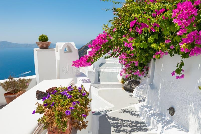 Belle terrasse avec les fleurs roses, île de Santorini, Grèce photos libres de droits