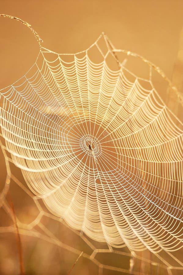 Belle toile d'araign?e avec la ros?e sur le matin d'hiver, le lever de soleil d'or brillant sur la toile d'araign?e et l'herbe sa photo stock
