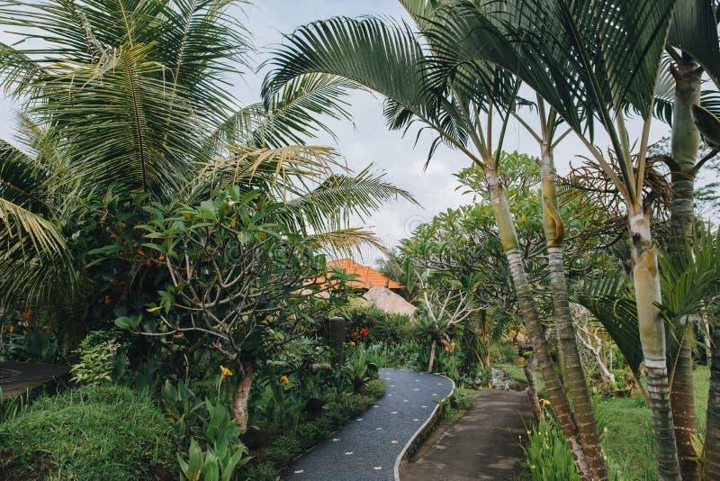 belle végétation verte et voie confortable photos libres de droits
