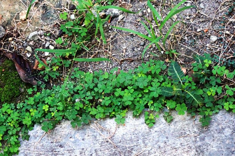 Belle varie erbe fresche di verde fotografie stock