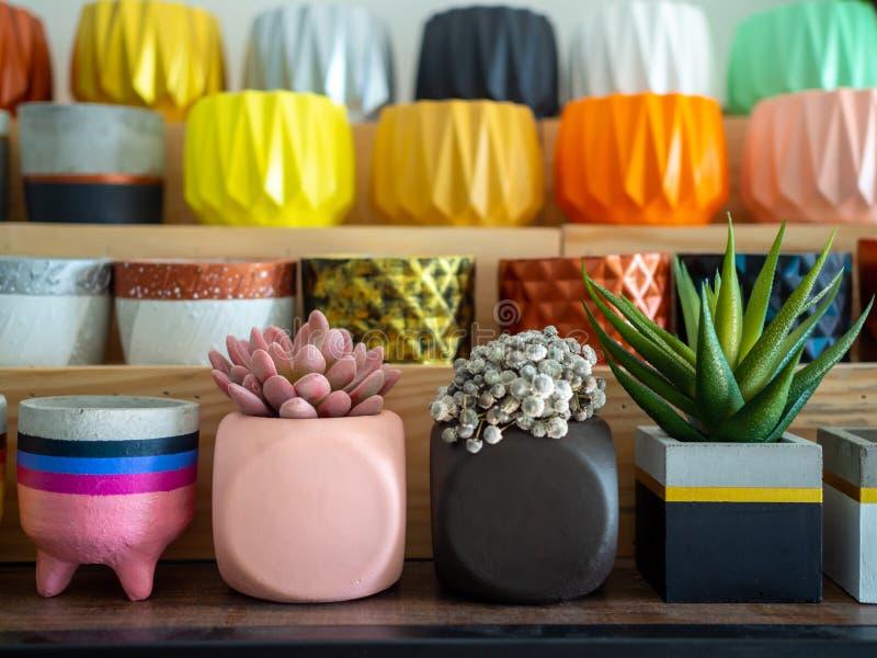 Belle varie piantatrici concrete geometriche con il cactus, il fiore e la pianta succulente Molti vasi concreti dipinti variopint fotografie stock