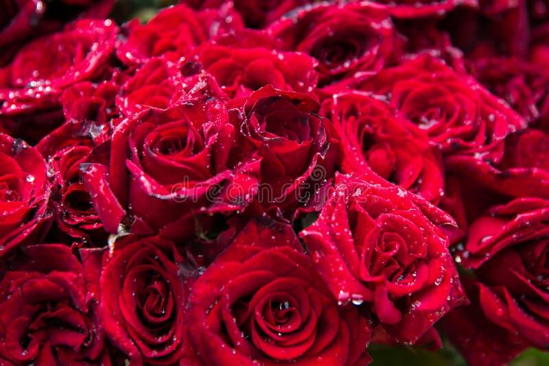 Belle vente de fleur de rose de rouge sur le marché dans Chidambaram, Tamilnadu photo stock