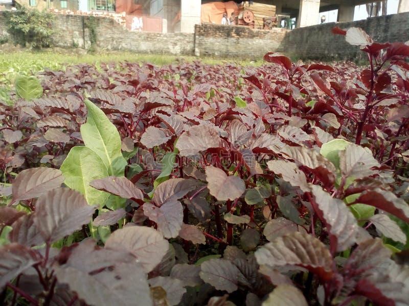 Belle verdure fotografie stock