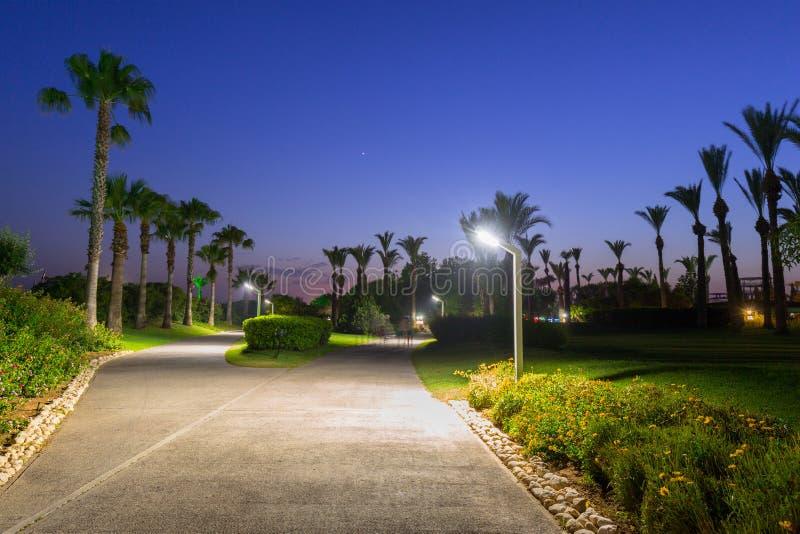 Belle voie avec des palmiers ? la plage de la Turquie image stock