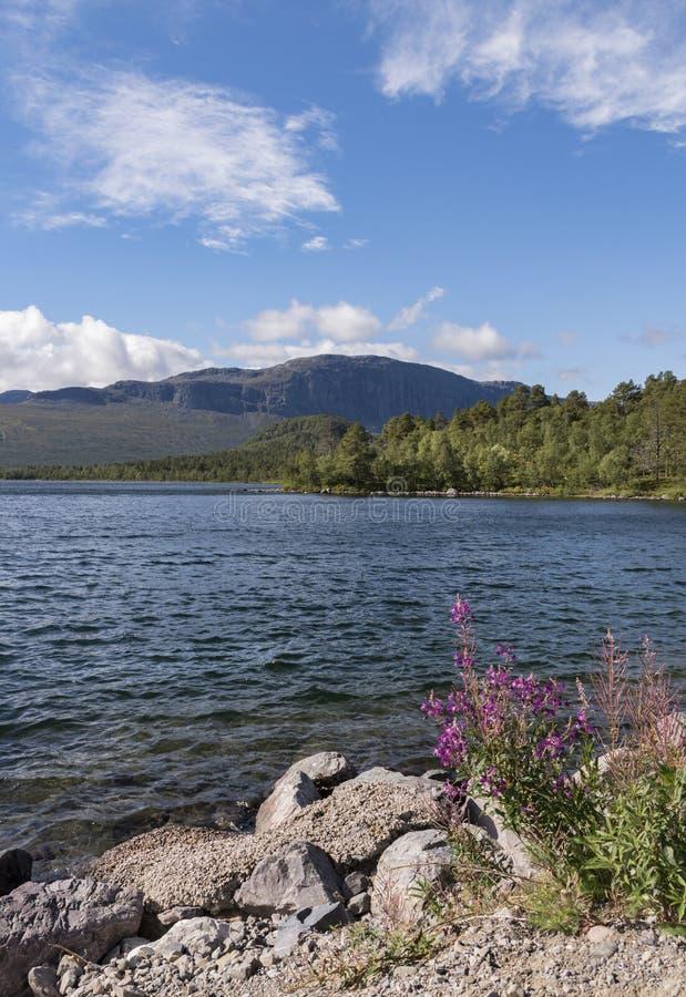Belle vue au-dessus de lac calme avec des fleurs sur le rivage, Suède photographie stock