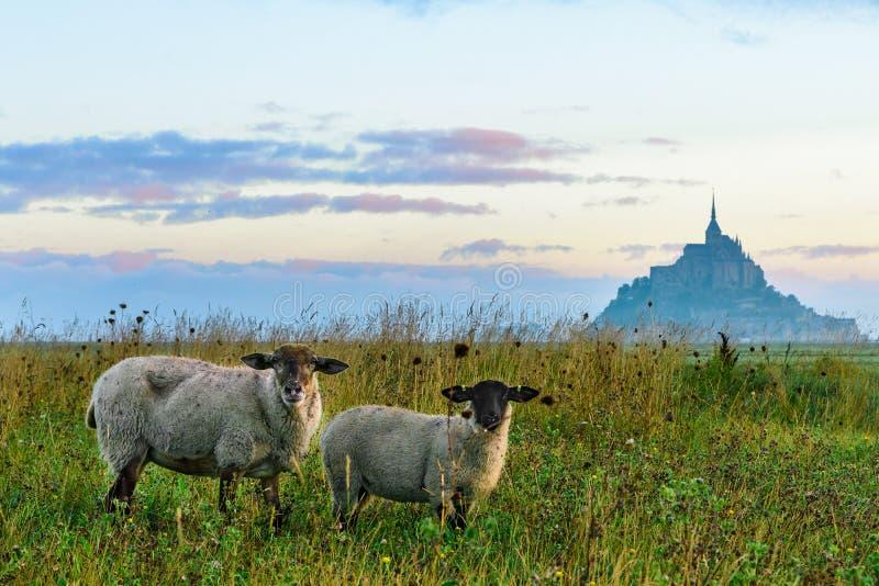 Belle vue d'abbaye de Mont Saint Michel sur l'île avec des moutons sur le champ, Normandie, France du nord photos libres de droits