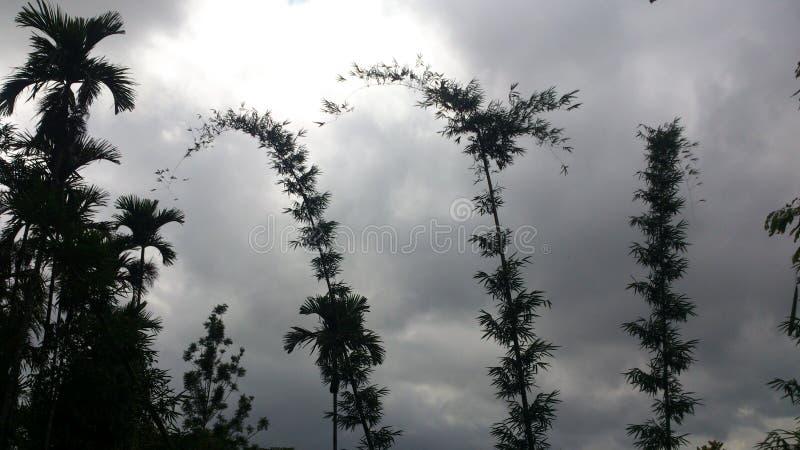 Belle vue d'un type de bambou et d'autres arbres image stock