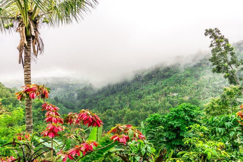 Belle vue dans Munduk, Bali photo libre de droits