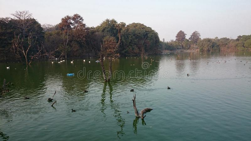 Belle vue de bord de lac photos libres de droits