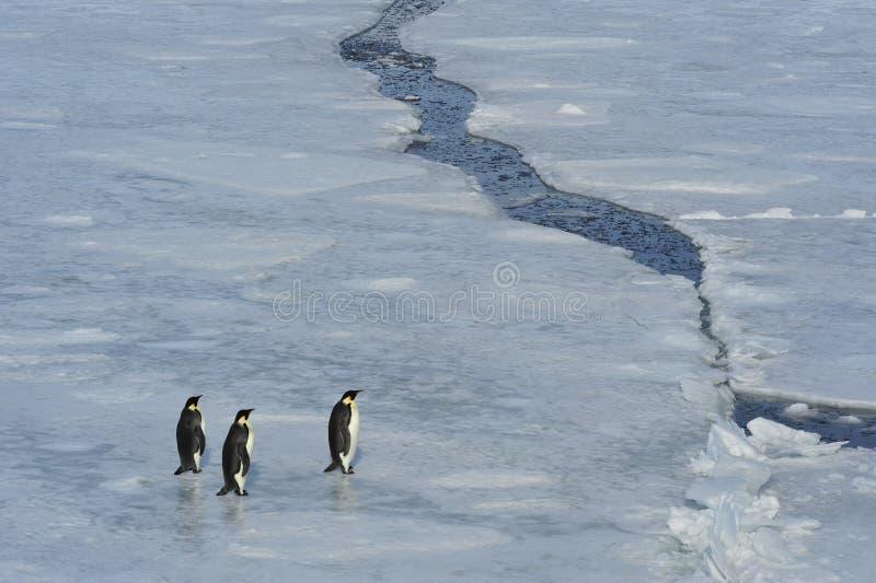Belle vue de colline Antarctique de neige d'icebergs photographie stock libre de droits