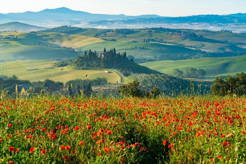 Belle vue de Hilly Tuscan Field verte en été photos stock